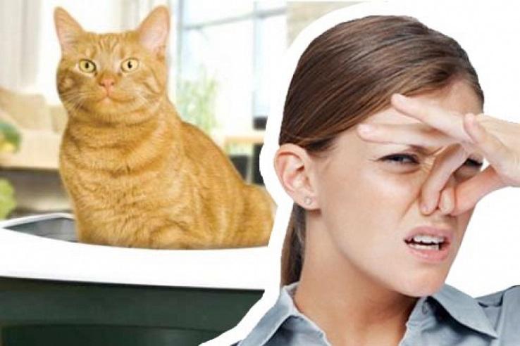 Запах мочи домашних животных в Выксе