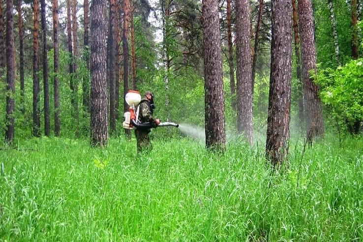 Обработка от клещей лесных массивов в Выксе